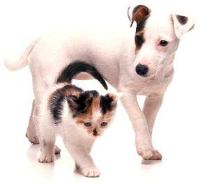Kitten&Pup